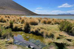 La laguna Vinto est comme une oasis de verdure dans le Sud Lipez!