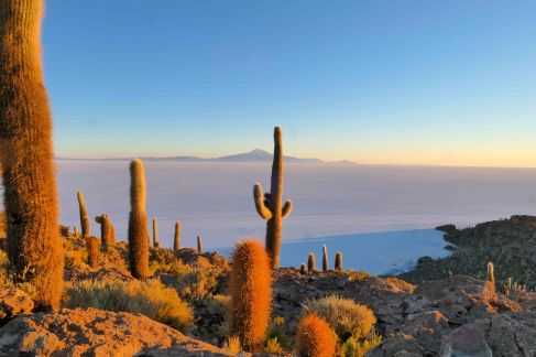 Les couleurs orangées sur les cactus