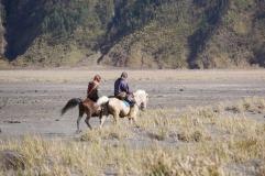 Des chevaux dans le desert de cendre
