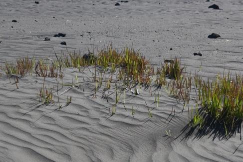 Malgré les éruptions régulières, la cendre rend le terrain fertile, et à la moindre pluie, l'herbe se remet à pousser