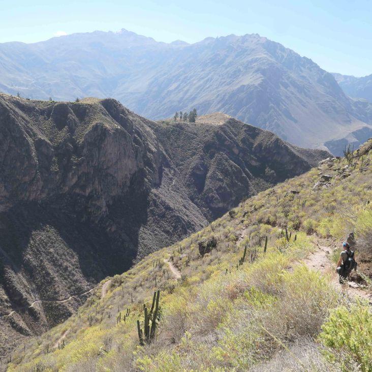 Le chemin descendant dans le canyon Colca entre herbe basse et premier cactus.