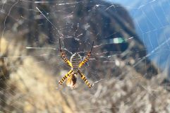 Une araignée aux belles couleurs sur sa toile!